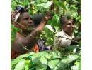 Papua New Guinea Plantation Sigri AA